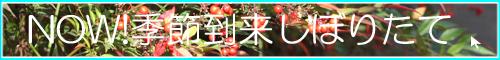 季節限定【冬酒】へGO!
